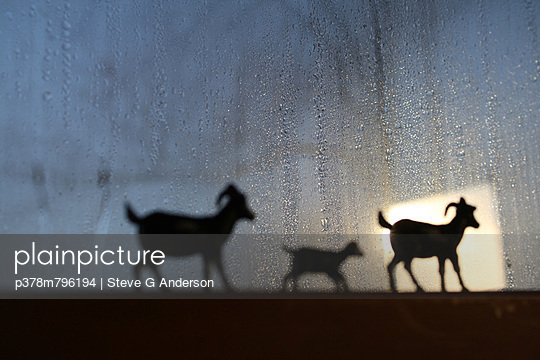 Animals on windowsill - p378m796194 by Steve G Anderson