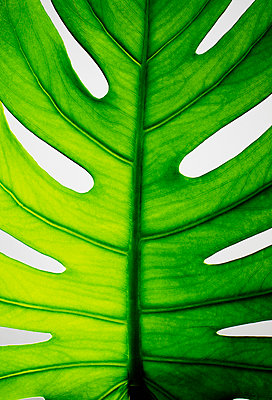 the leaf - p5676763 by Greg Conraux