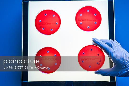 Hände des Wissenschaftlers Forscher pfropft Bakterien im Labor - p1474m2172716 von Yuriy Orgakov