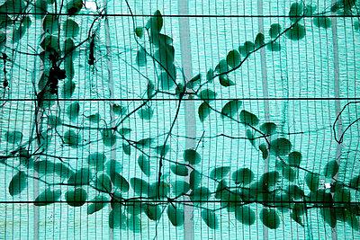Leaves - p993m877395 by Sara Foerster