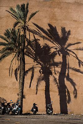 Marrakesh, Palm tree and motorbikes - p1253m2152628 by Joseph Fox