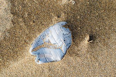 Müll am Strand - p896m836061 von Patrick Post