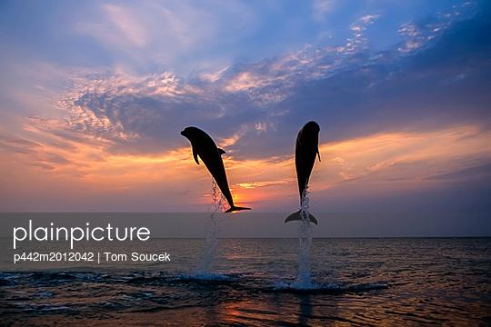p442m2012042 von Tom Soucek