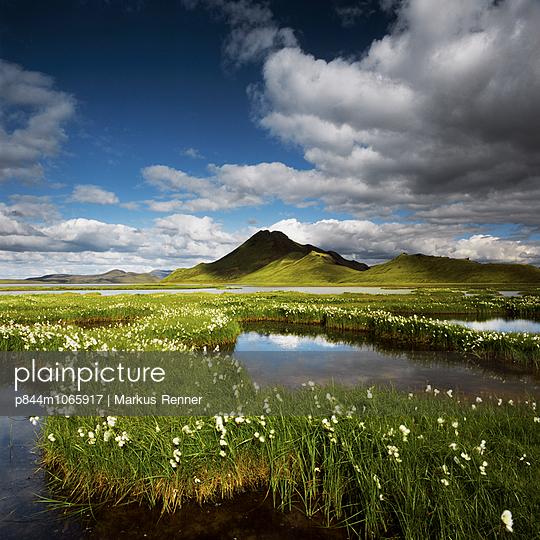 Cotton grass - p844m1065917 by Markus Renner