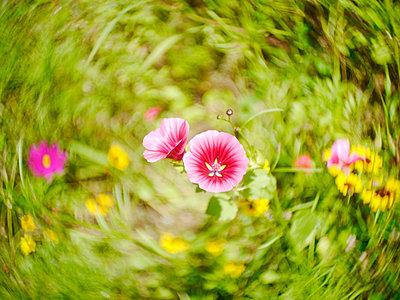 Wild Flowers - p1654m2280231 by Alexis Bastin