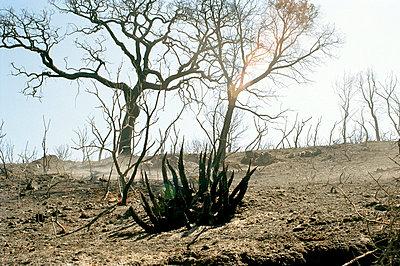 Waldbrandwüste - p2684242 von Stephan Sasek