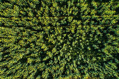 Germany, Baden-Wuerttemberg, Swabian Alb, Aerial view of Schurwald in spring - p300m1587692 by Stefan Schurr
