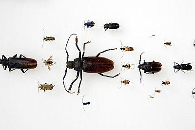 Bugs - p3270211 by René Reichelt