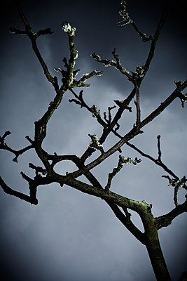 Dead tree - p1149m1474756 by Yvonne Röder