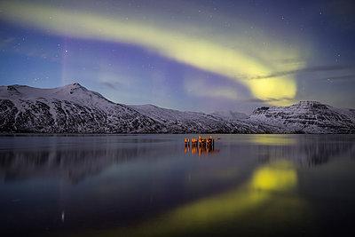 Aurora Borealis, or Northern lights; Djupavik, West Fjords, Iceland - p442m2004314 by Robert Postma