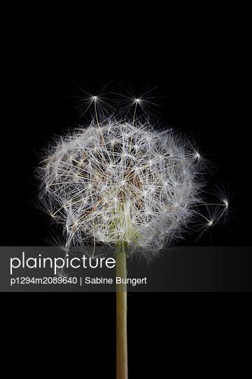 p1294m2089640 by Sabine Bungert