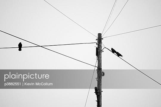 p3882551 von Kevin McCollum
