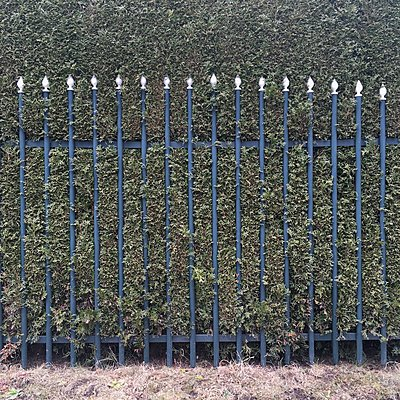 Metal fence in front of a hedge - p1401m2258566 by Jens Goldbeck
