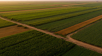 Serbia, Vojvodina, Aerial view of corn, wheat and soybean fields in the late summer afternoon - p300m2012907 von oticki
