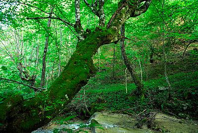 Wald - p56711176 von Le Cercle Rouge