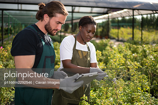 Multiethnic farmers inspecting plants outside glasshouse - p1166m2292546 by Cavan Images