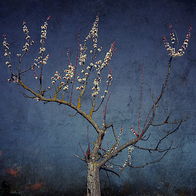 When Springtime returns - p1633m2208857 by Bernd Webler
