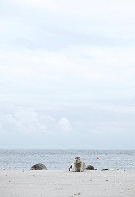 Erholung am Strand - p249m1055098 von Ute Mans