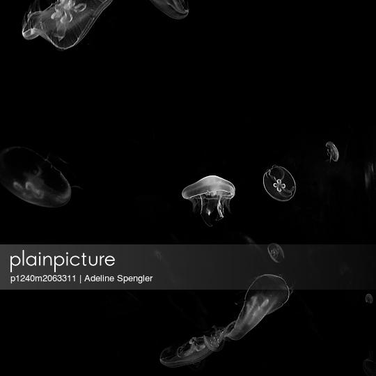 Jellyfishes - p1240m2063311 by Adeline Spengler