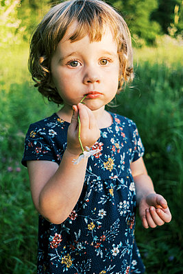 Sunny portrait of a toddler girl chewing on a daisy - p1166m2201284 by Cavan Images