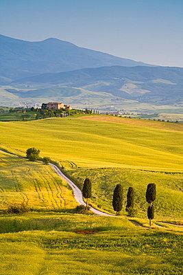 Farmhouse, Val d' Orcia, Tuscany, Italy - p6511214 by Doug Pearson photography