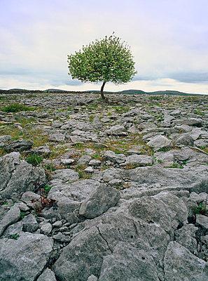 Baum auf felsigem Boden - p3300003 von Harald Braun