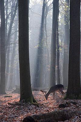 Hirsch im Frankfurter Stadtwald - p4170145 von Pat Meise