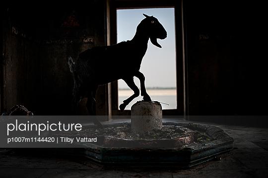 Goat silhouette - p1007m1144420 by Tilby Vattard