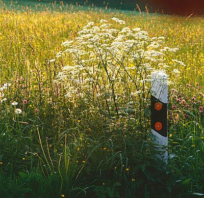 Overgrown - p1016m767011 by Jochen Knobloch