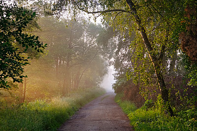 Germany, Bavaria, Swabia, Tussenhausen, forest path and morning fog, Augsburg Western Woods Nature Park - p300m2004786 von Martin Siepmann