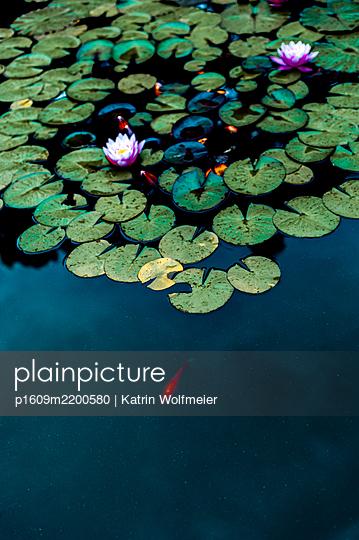 p1609m2200580 by Katrin Wolfmeier