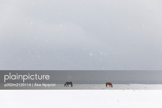 Horses in snow covered field - p352m2120114 by Åke Nyqvist