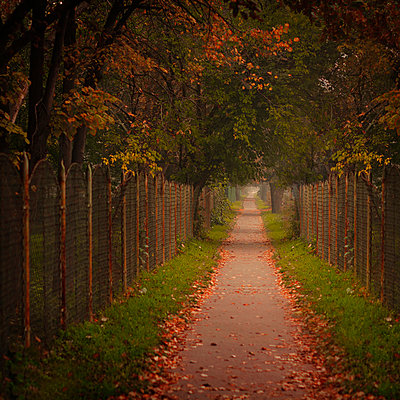 Autumn path with falling leaves - p1072m1022079 by Ildiko Neer