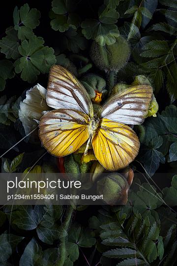 p1294m1559408 by Sabine Bungert