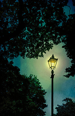 Lit Lamppost Amongst Trees  - p1248m1161872 by miguel sobreira