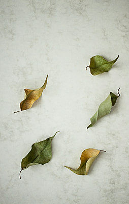 Dead leaves - p971m1054832 by Reilika Landen