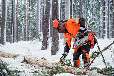 Lumberjack at work - p312m2139392 by Hans Berggren