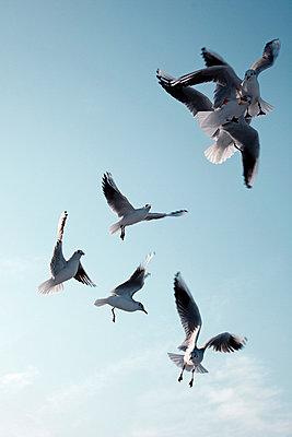 Möwen schweben in der Luft - p4150400 von Tanja Luther