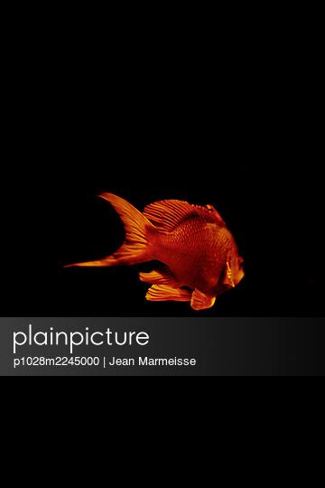 Underwater - p1028m2245000 by Jean Marmeisse