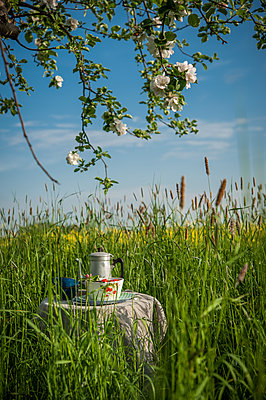 Picnic under blooming apple  - p1288m1161437 by Nicole Franke