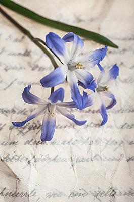 Spring flowers on handwritten letter - p971m2087115 by Reilika Landen