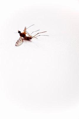 Insekt - p580m1034812 von Eva Z. Genthe