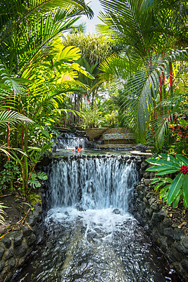 Costa Rica, Alajuela Province, La Fortuna, Tabacon Grand Spa Thermal Resort, Thermal Springs Heated By The Underground Magma Of The Arneal Volcano - p651m2032579 by John Coletti photography