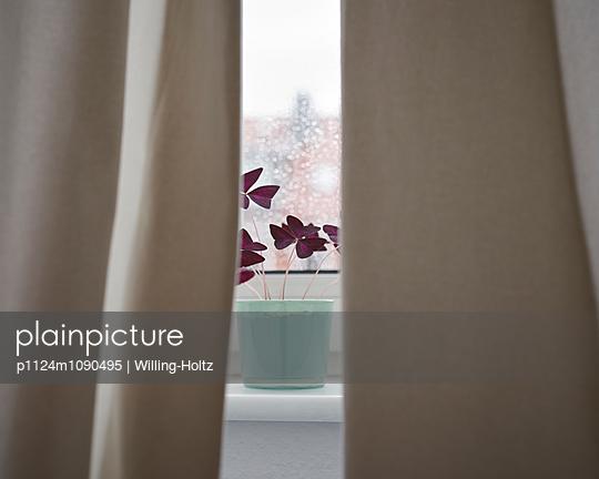 Fensterbank mit Vorhang und Blume - p1124m1090495 von Willing-Holtz