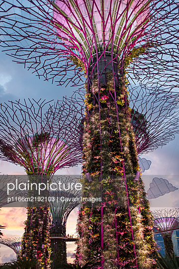 Solar-powered supertrees at dusk in Gardens By The Bay, Singapore. - p1166m2192103 by Cavan Images