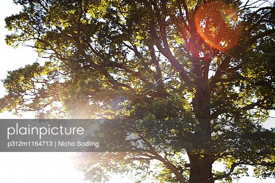 p312m1164713 von Nicho Sodling