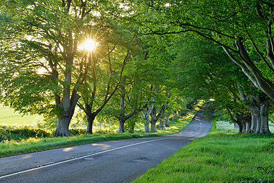 United Kingdom, England, Dorset, Beech tree lined road with sunbeams - p300m2083861 by Martin Rügner