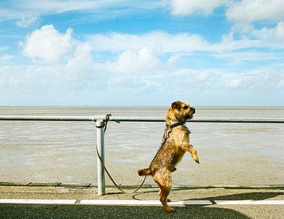 Dog, Friesland - p1132m1020472 by Mischa Keijser
