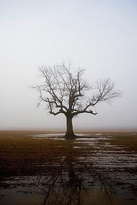 Rainy - p395m1007819 by John Weber