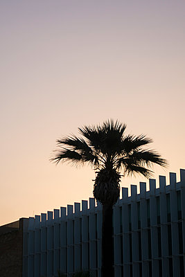 Silhouetted palm tree outside The American University of Beirut - p794m1477252 by Mohamad Itani